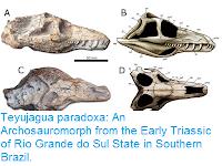http://sciencythoughts.blogspot.com/2016/03/teyujagua-paradoxa-archosauromorph-from.html