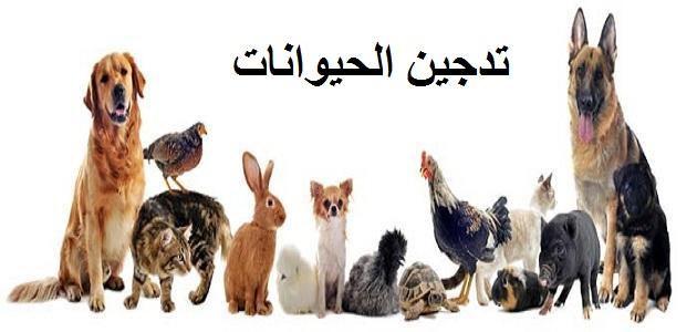 تدجين الحيوانات