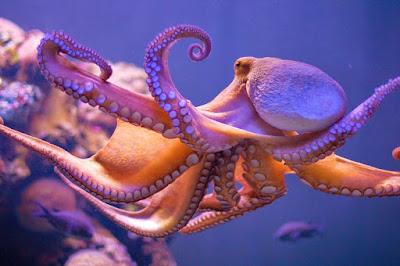 mükemmel dna'ya sahip canlılar, en zeki yaratıklar
