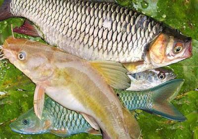 Ikan Khas Sungai di Indonesia