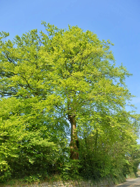 Green tree leaves against a blue sky