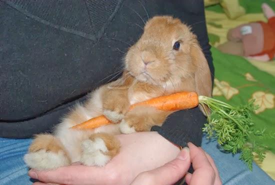 Tengo Un Conejo El Mito De Las Zanahorias La zanahoria es una hortaliza con alto contenido de agua, por ende, supone un buen aporte de fibra. tengo un conejo el mito de las zanahorias
