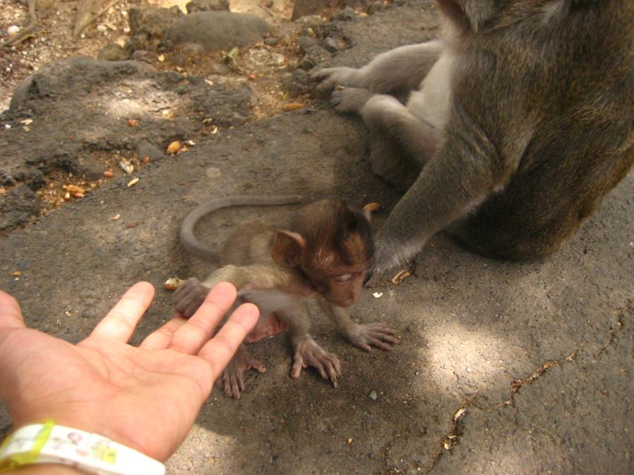 새끼 원숭이에게 손을 내밀어 본다.