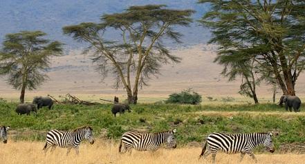 Tőke Péter Veszélyes szafari vadászregény