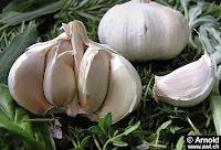 Bawang Putih, Obat Alami Berbagai Penyakit