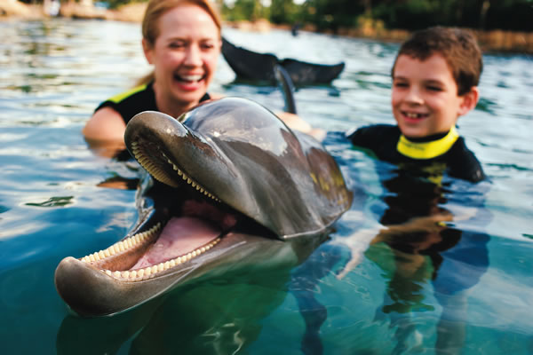 Animales marinos en Discovery Cove