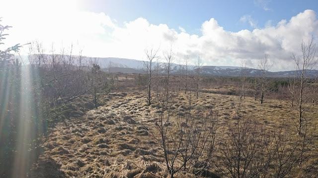 Lava field, Viking horses