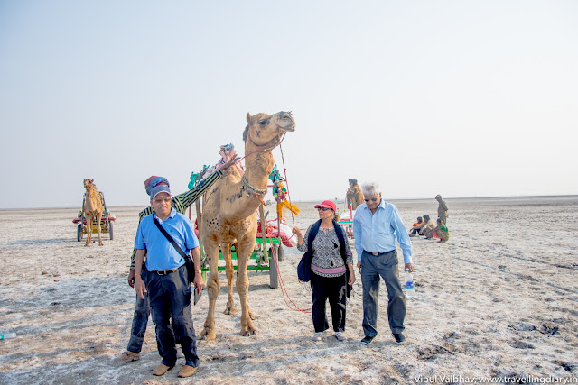 camel cart in rann
