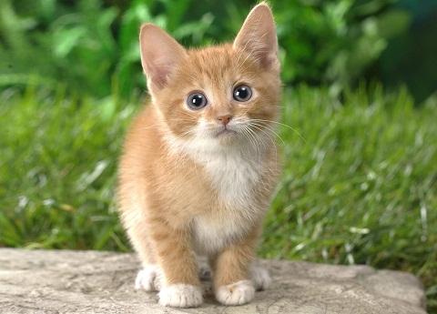 Amankah Memelihara Kucing Ketika Sedang Hamil?