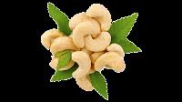 cashew nut clipart