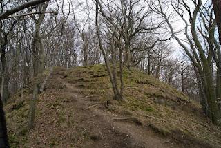 Ein schmaler Weg führt einen kleinen Hügel im Wald hinauf
