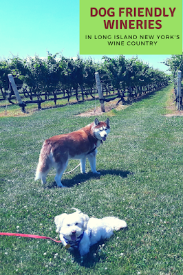 Dog friendly wineries, Dogs, Dog Friendly Activities, Pet Friendly, Long Island Wine Country