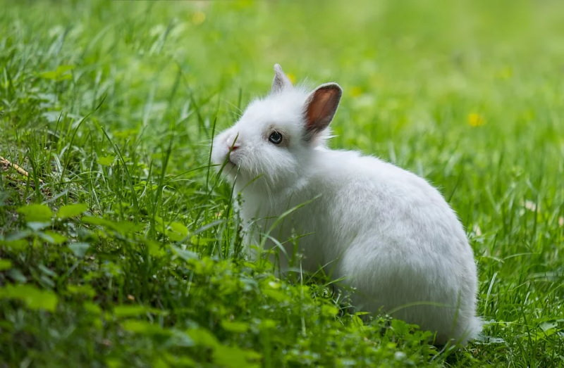 coelho branco na relva