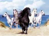 الخيل واغرب المعلومات العلميه عنه Equus caballus
