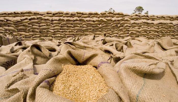 wheat-in-market-amroha