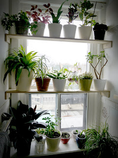 Elven maker these are a few of my favourite things - How to hang plants in front of windows ...