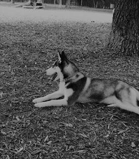 McAllister Dog Park San Antonio TX