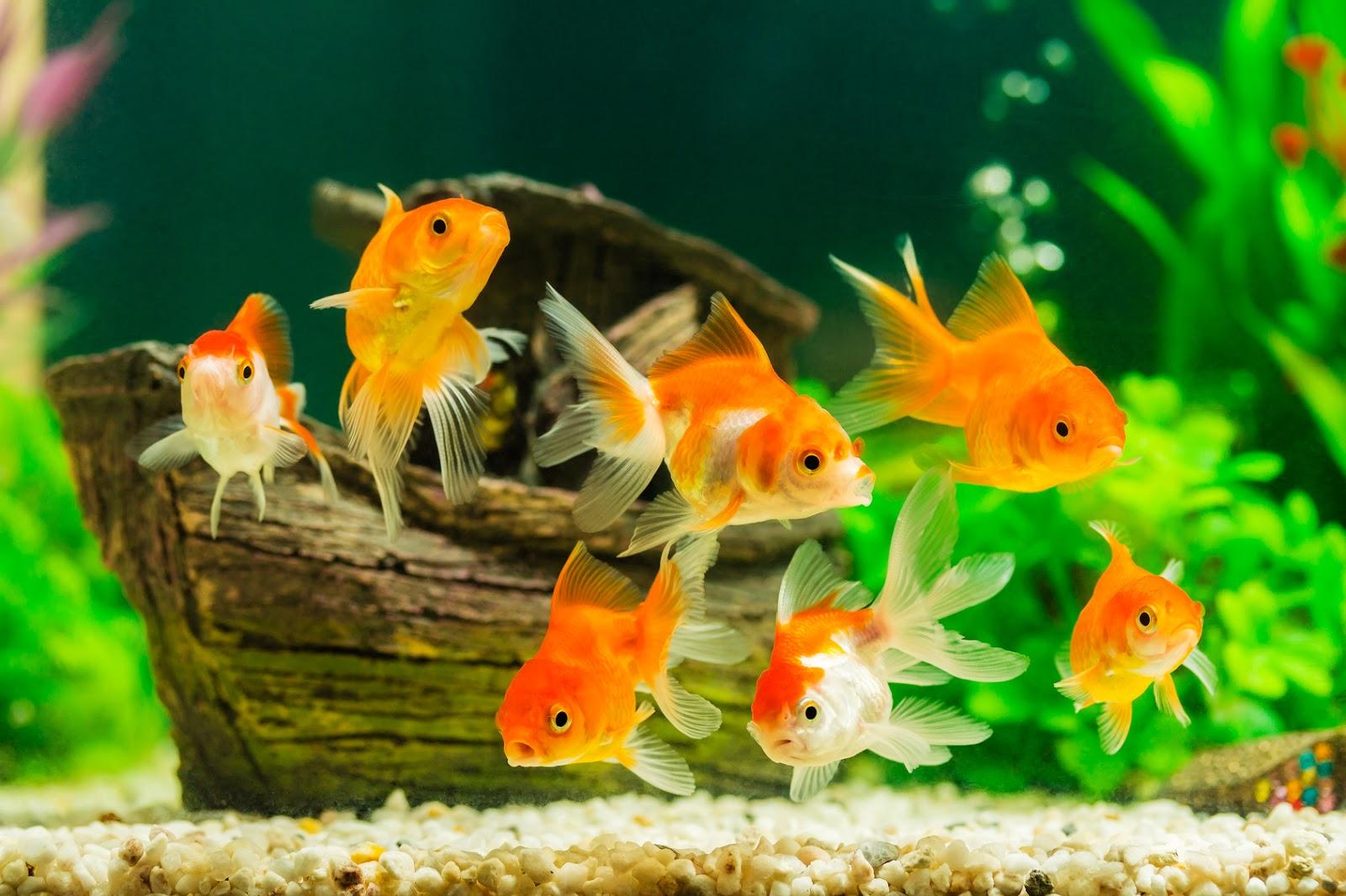Ciesz Się Pięknym Akwarium Bez Glonów Blog Zookarina