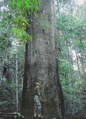 Contoh Teks Laporan Hasil Observasi pada Tumbuhan 8 Contoh Teks Laporan Hasil Observasi pada Tumbuhan, Hewan, Alam dan Lingkungan Lengkap