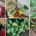 Remove This From Your Home! Highly Toxic Plants That Will Kill You!