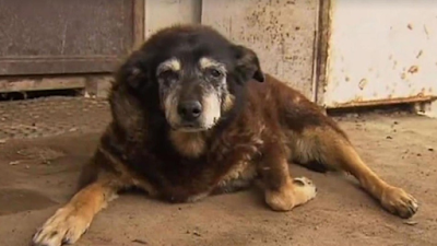 worlds oldest dog dies at 30 years