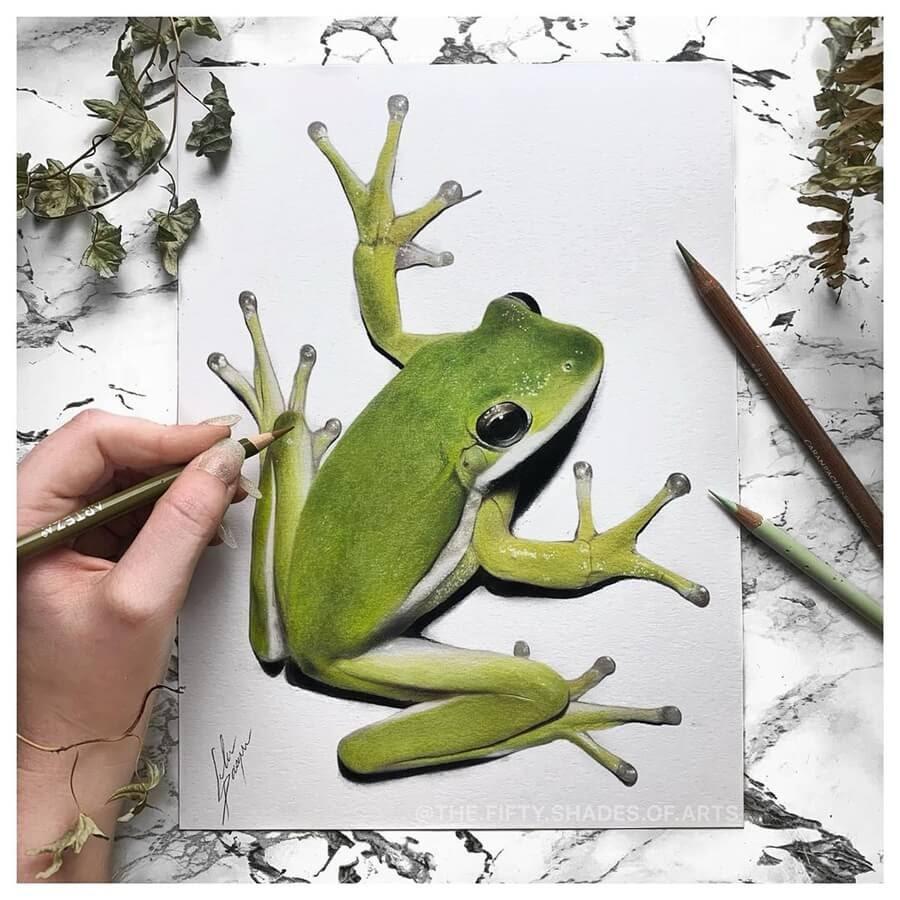03-Tree-Frog-Solene-Pasquier-www-designstack-co