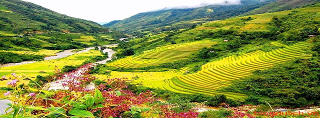 Sapa tours are the best choice to discovery Vietnam natural.