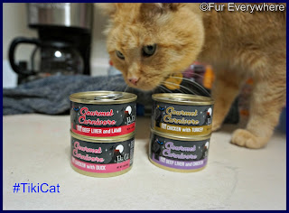 Carmine checks out some Tiki Cat canned cat food.