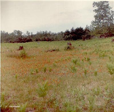 Michigan meadow