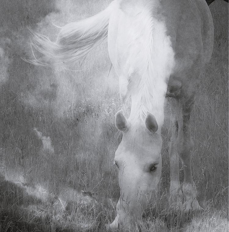 Коллекция фотографий «Облачные Лошадки» Lot #47
