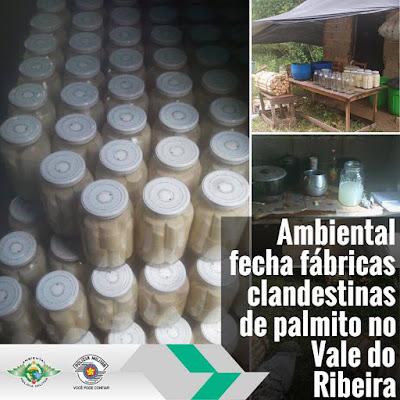 Polícia ambiental fecha fábricas clandestinas de palmito em Jacupiranga e Sete Barras