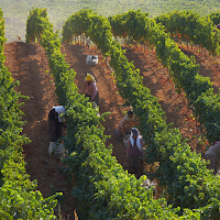 A Brief History of Wine in Turkey