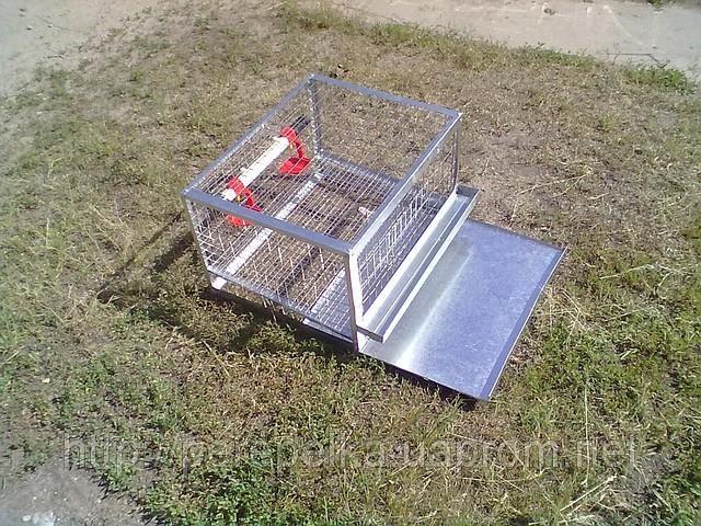 Hướng dẫn chọn lồng nuôi, thức ăn cho chim cút