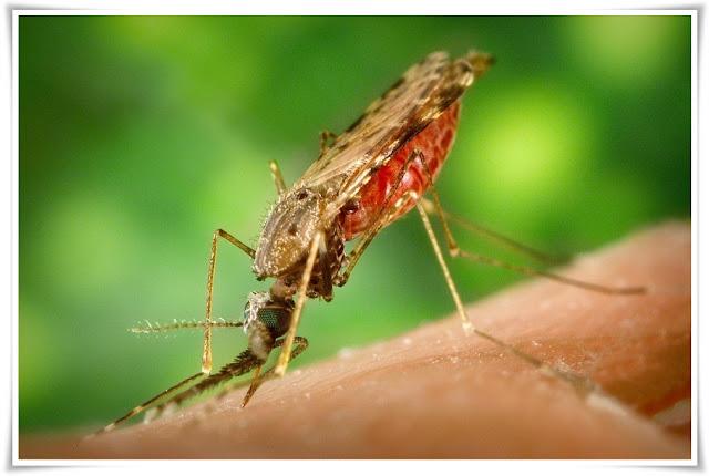 Cara pengobatan dan mencegah Malaria