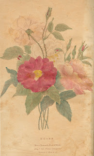 "A color illustration of a bundle of roses, ""moss, damask, red and white."""