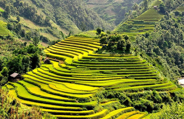 Strange colors of terraced fields in the northern mountains of Vietnam