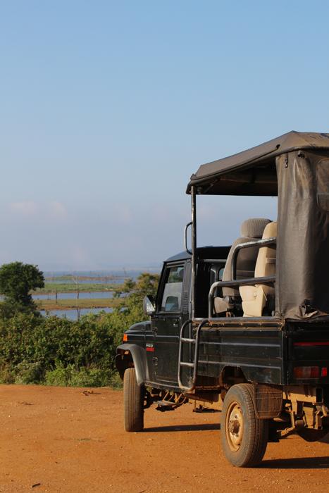 Jeep im Udawalawe Nationalpark, Sri Lanka