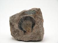 ricerca sui fossili e sulla paleontologia