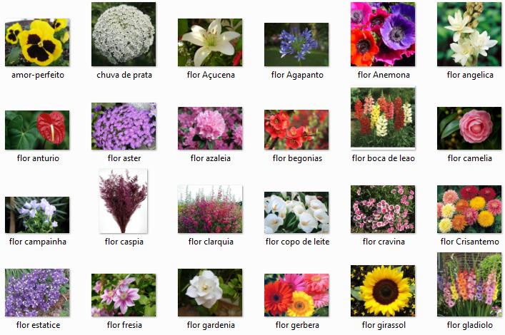 Flores do brasil - Clases de flores y sus nombres ...