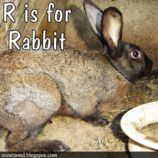 r is for rabbit homeschool unit from In Our Pond