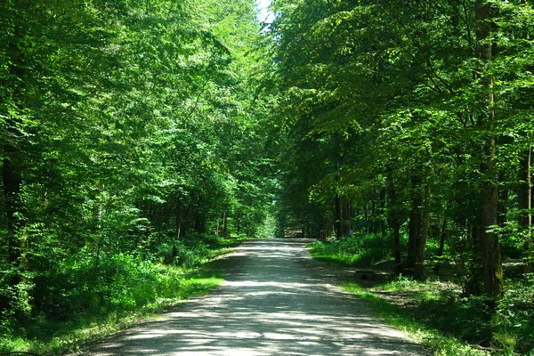 bourg-en-bresse forêt seillon balade randonnée parcours nature