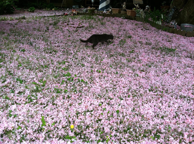 Stray-Cat-with-Cherry-Blossom-Litter-Spring-2013