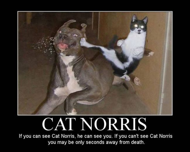 Cat Norris always finds you.
