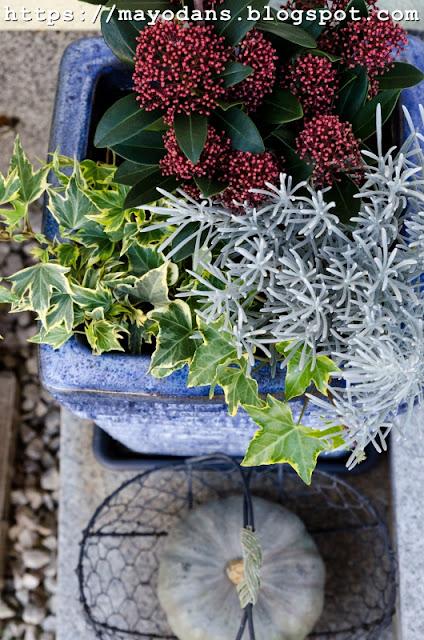 Herbstpflanzen für den Topf