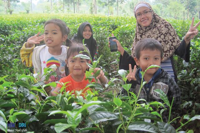 Liburan Dadakan Ke kebun Teh Wonosari Lawang - Malang