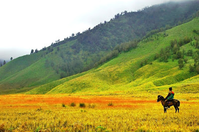 Padang Rumput Savanah Gunung Bromo