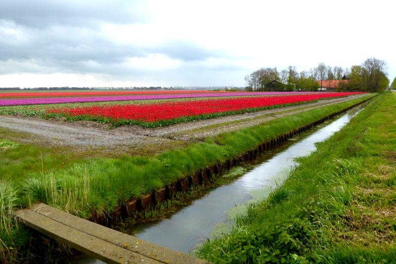 Ruta del tulipán, Holanda
