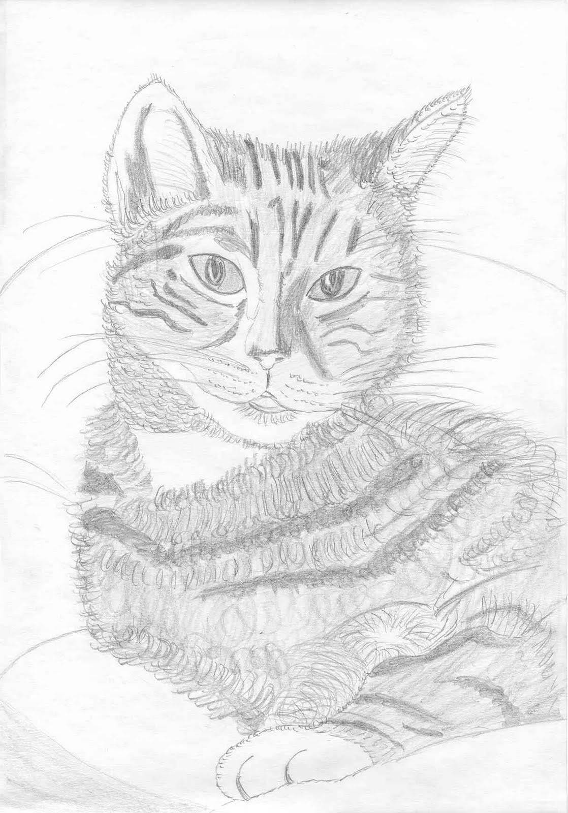 Katzenzeichnungen