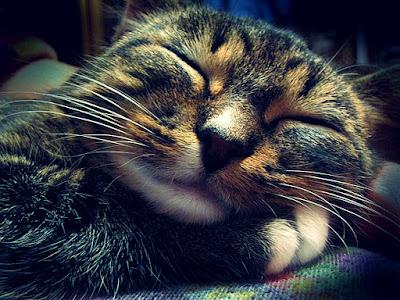 Cute Cats Kitty Pets 15