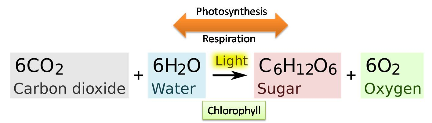 what is the chemical formula for photosynthesis
